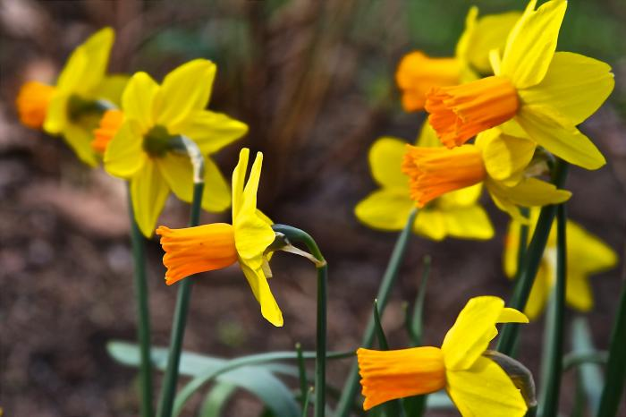 Весна Месяцеслов